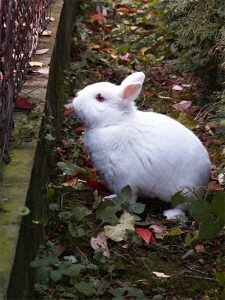 Keeping rabbits out with fences
