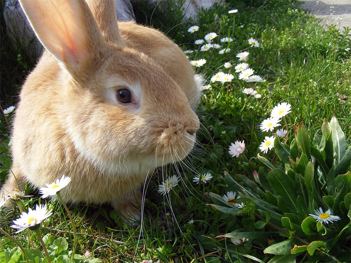 Ways to keep rabbits out of your garden