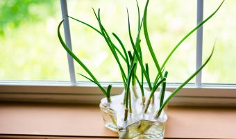 How to Grow Green Onions in Your Own Kitchen (Water Method)