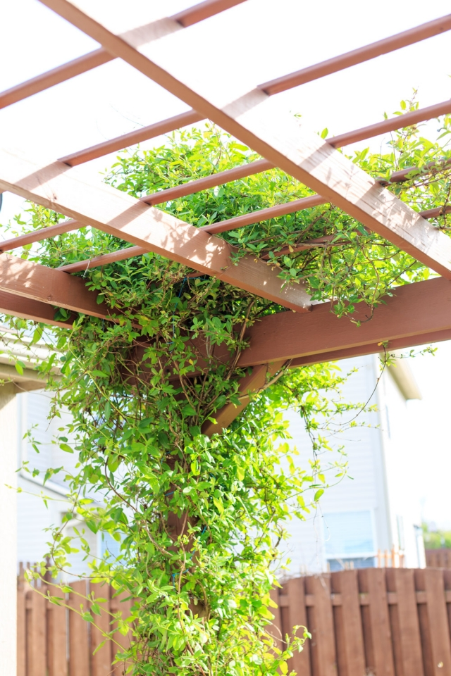 14 Best Climbing Plants For Pergolas Arches Arbor Or Trellis