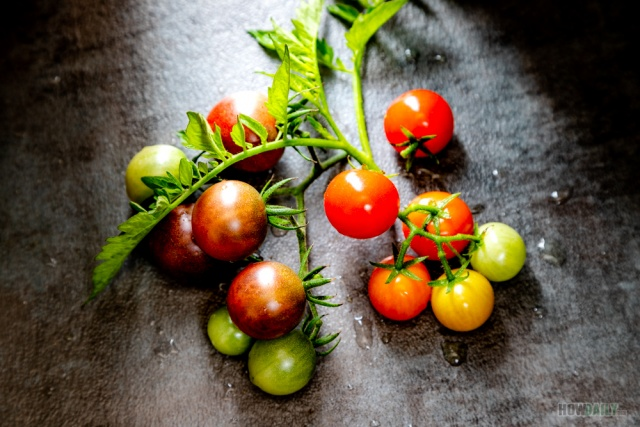 Tomatos by How Daily